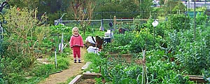 Northcote Community Gardens and Reserve's Image